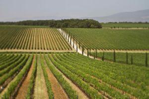la-braccesca-antinori-agricola402_MG_3511