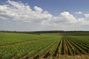 la-braccesca-antinori-agricola525_MG_4493
