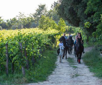 18. passeggiata cavallo pic nic