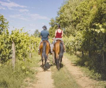 20. Passeggiata a cavallo con pic nic toscano