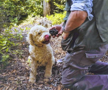 Caccia al tartufo truffle hunting montepulciano