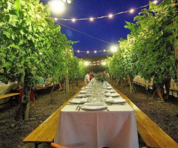 cena tra in vigna filari montepulciano vineyard