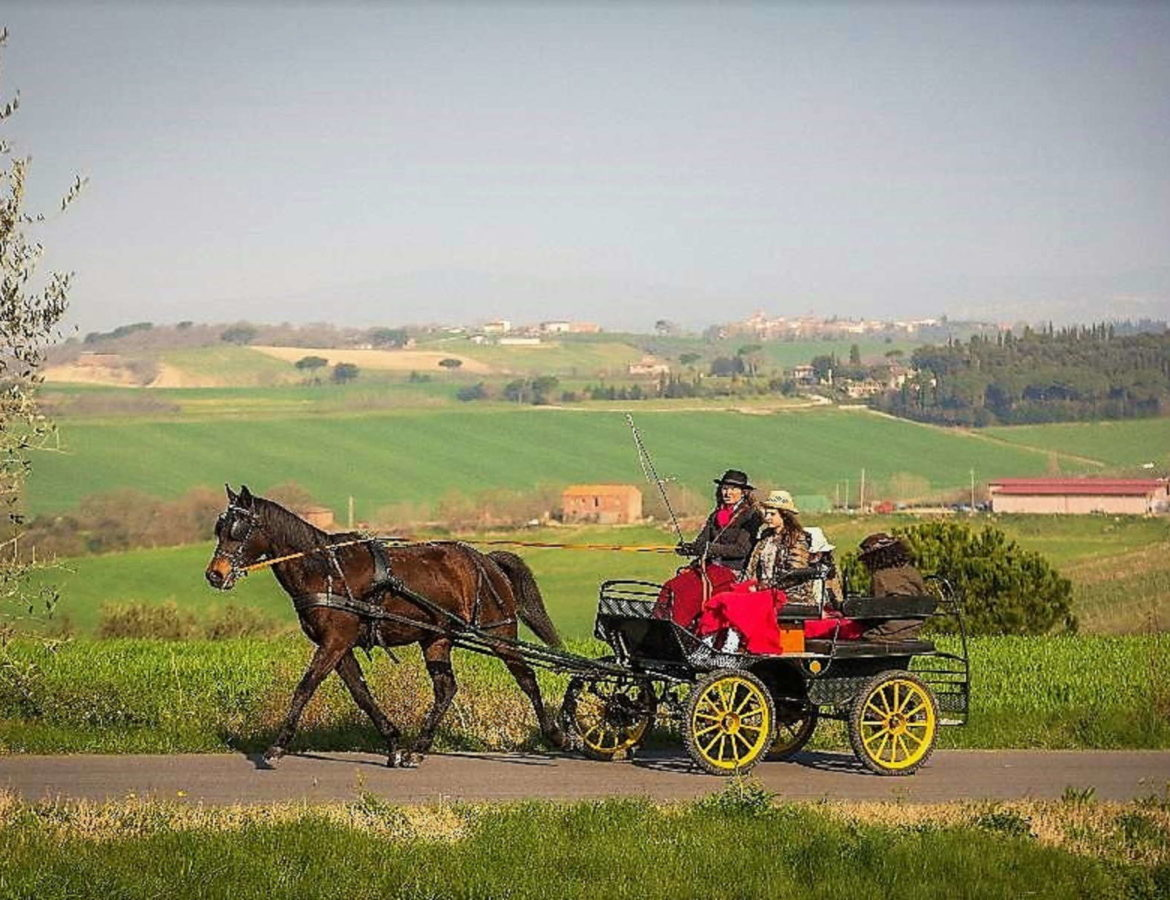 Tour in carrozza countryside nature montepulciano