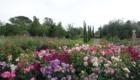 Parco Villa Trecci 6